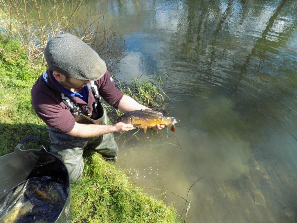 Meadow Lakes Cornwall Fishing Lakes